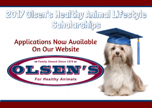 Healthy Animal Lifestyle Scholarship