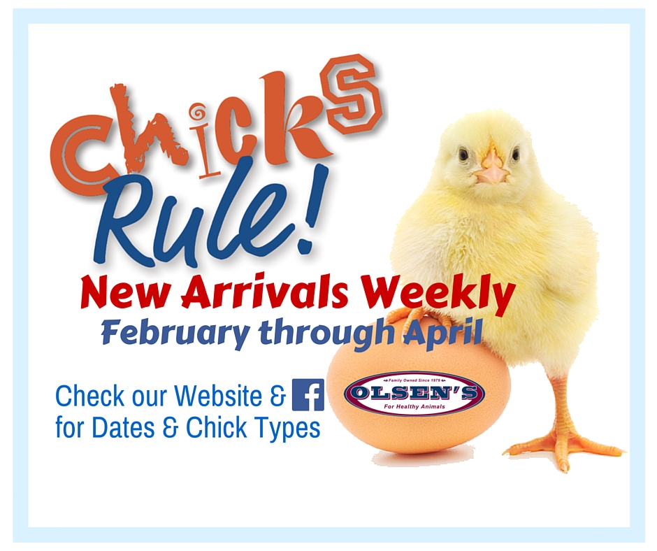 Chick Arrivals