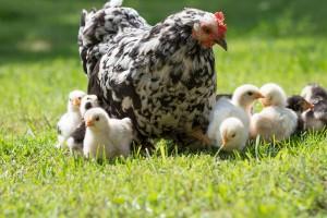 Chick Seminars