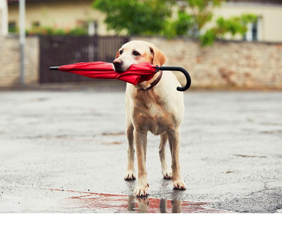 Pet Safety During Monsoon Season