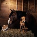 horse dog and cat in barn