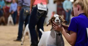 Shop show feeds at Olsen's for Better Animals