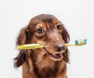 pet dental awareness